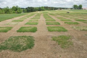 Cover photo for 2015 Spring Green-Up of Warm-Season Grasses