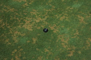 Cover photo for Anthracnose Alert!