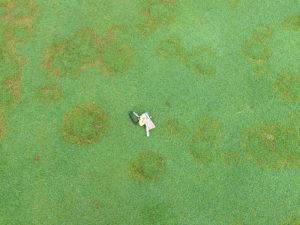 Cover photo for Got Creeping Bentgrass Problems?
