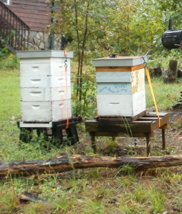 Cover photo for Protective Measures of Beehives During Hurricanes