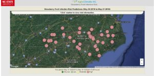 Cover photo for Major Strawberry Fruit Rot Risk Expected May 15, 2018
