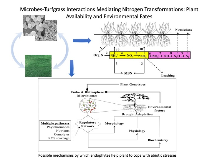 microbes-Turfgrass Interactions chart image