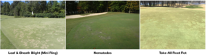 Cover photo for New Turfgrass Disease Profiles
