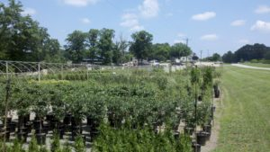 Cover photo for Essential Nurseries and Garden Centers Remain Open and Vibrant