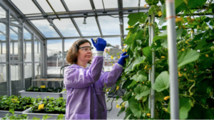 Cover photo for New Research Study to Promote Food Safety From NCSU