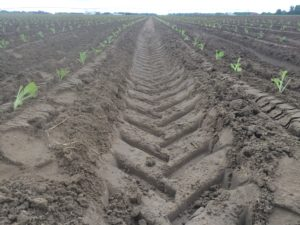 Cover photo for From the Field - Agronomy Notes: Vol. 4, Num. 5