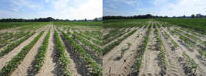 Cover photo for Consider Planting Conditions When Choosing Preemergence Herbicides