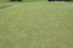 Cover photo for Does Pythium Root Dysfunction Equal Pythium Root Rot?
