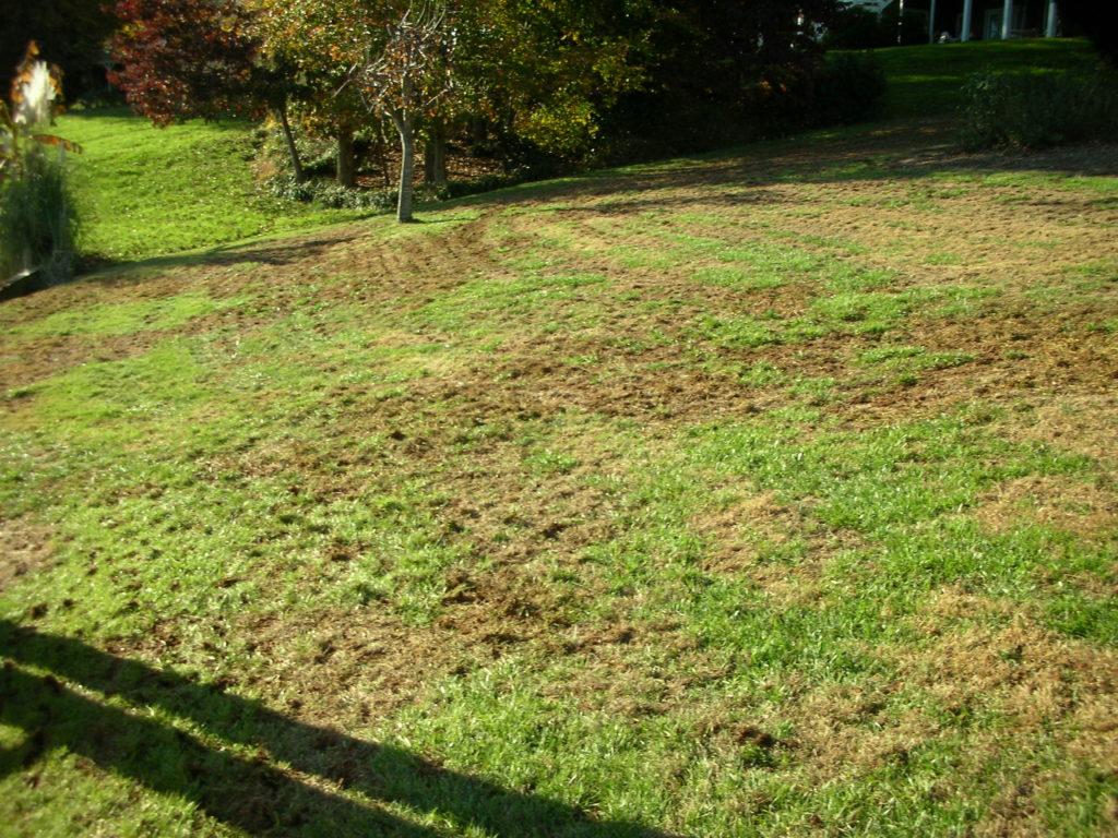 aerified lawn