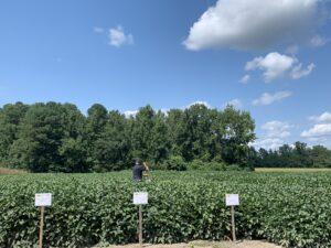 Cover photo for Mid-Season Soybean Management Webinar 7/1/21