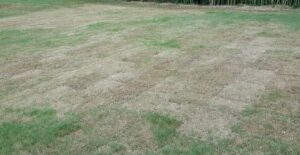 Cover photo for Now Available: Key to Turfgrass Insect Damage