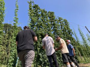 four brewers looking at new hop lines at NC State